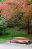 Autumn park. Rainy weather Stock Photography
