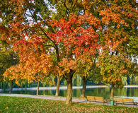 Autumn Park. With a red tree and a pond Royalty Free Stock Images