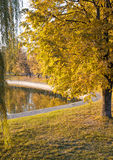 Autumn Park. With a red tree and a pond Stock Images