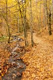 At Autumn yellow leaves at forest and small river.  stock image