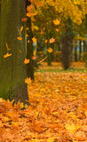 Autumn park road Royalty Free Stock Images