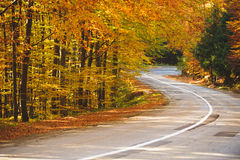 Autumn Park and Road Stock Photography