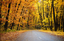 Autumn park road Stock Photos