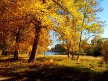 Autumn park. In the Russia Royalty Free Stock Image