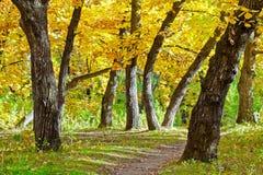 Autumn park scene. Beautiful autumn morning park scene Stock Photography