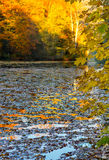 Autumn park scenery- pond- leaves on water Stock Images