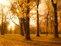 Autumn park scenery Royalty Free Stock Images