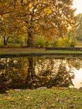 Autumn park scenes Stock Photo