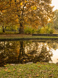 Autumn park scenes Royalty Free Stock Images