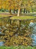 Autumn park scenes Stock Photos