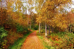 Autumn in the park, Scotland Stock Photography