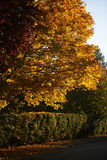 Autumn park with shady sidewalk Royalty Free Stock Photos