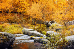 Autumn park with small river in Ukraine Stock Photography