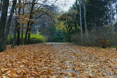 Autumn in park Sofiyivka. Uman city, Ukraine royalty free stock images