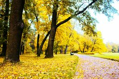Autumn in the Park and on the streets. Defoliation, yellow leaves, mushrooms on the lawn. Walking along the city streets and alleys of the Park royalty free stock images