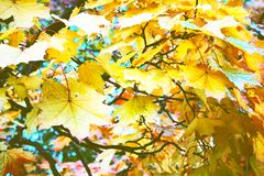 Autumn in the Park and on the streets. Defoliation, yellow leaves. Walking along the city streets and alleys of the Park stock photography