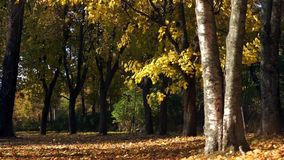 Autumn park with sun beam. Autumn carpet of fallen leaves stock video footage