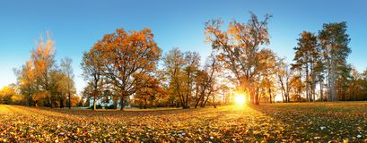 Autumn park with sun and forest - Panorama royalty free stock images