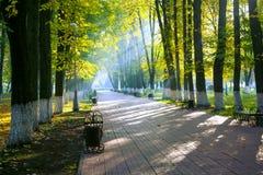 Autumn park in sun rays. Beautiful autumn park at sunrise in sunshine Stock Photos