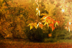 Autumn in the park Royalty Free Stock Photo