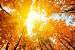 An autumn park Stock Photos