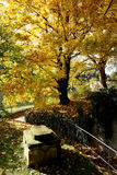 Autumn park in the sunlight Royalty Free Stock Images