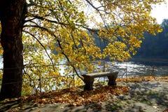 Autumn park in the sunlight Stock Image