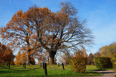 Autumn park on a sunny day Royalty Free Stock Photography