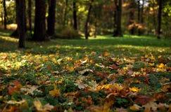 Autumn park. On a sunny day Royalty Free Stock Photo