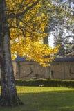 Autumn Park in Sunny Day Stock Photo
