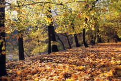 Autumn park at sunny day Royalty Free Stock Photography