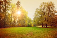 Autumn park with sunny glade and big stock photo