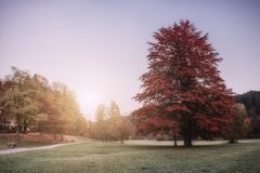 Vintage Autumn Park on Sunrise royalty free stock photography