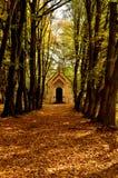 Autumn park. Park in autumn sunshine lit Stock Photography