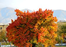 Autumn park in Tekeli autumn tree vivid tree Royalty Free Stock Image