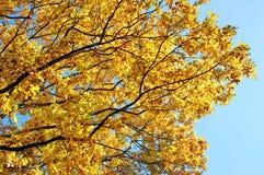 Autumn park tree Royalty Free Stock Photography