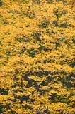 Autumn park tree Royalty Free Stock Photos