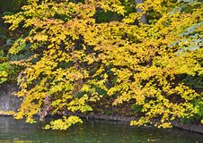 Autumn park tree over water Stock Photography