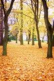 Autumn park Stock Photos
