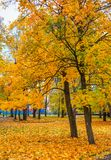 Trees with colorful leaves Stock Photography