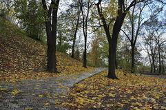 Autumn park. Trees and fallen leaves royalty free stock images