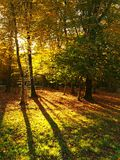 Autumn park trees and ground with autumn leaves, colorful maple and beaches leaves. Stock Image