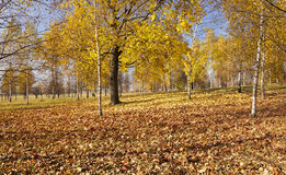 Autumn park Stock Images