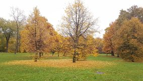 Autumn Park. Trees have fallen yellow leaves. Trees near the manhole cover Stock Photo