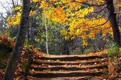 Autumn park. Stock Photos