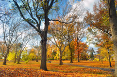 Autumn in the park. Stock Photo