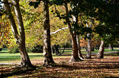 Autumn in park Stock Photos