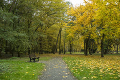 Autumn park with trees and leaves  photo. Beautiful picture, bac Royalty Free Stock Photo