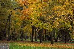 Autumn park with trees and leaves  photo. Beautiful picture, bac Royalty Free Stock Photos