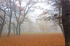 Autumn in park Royalty Free Stock Photo